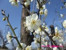 +++ りり☆Blog evolution +++ 広島在住OLの何かやらかしてる日記(・ω・)-20100221_038.jpg