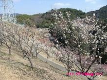 +++ りり☆Blog evolution +++ 広島在住OLの何かやらかしてる日記(・ω・)-20100221_040.jpg