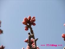 +++ りり☆Blog evolution +++ 広島在住OLの何かやらかしてる日記(・ω・)-20100221_042.jpg