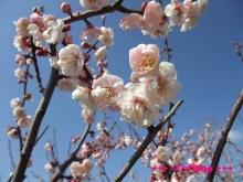 +++ りり☆Blog evolution +++ 広島在住OLの何かやらかしてる日記(・ω・)-20100221_045.jpg