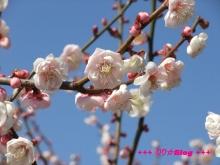 +++ りり☆Blog evolution +++ 広島在住OLの何かやらかしてる日記(・ω・)-20100221_046.jpg