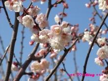 +++ りり☆Blog evolution +++ 広島在住OLの何かやらかしてる日記(・ω・)-20100221_047.jpg