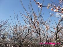 +++ りり☆Blog evolution +++ 広島在住OLの何かやらかしてる日記(・ω・)-20100221_048.jpg