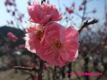 +++ りり☆Blog evolution +++ 広島在住OLの何かやらかしてる日記(・ω・)-20100221_050.jpg