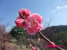 +++ りり☆Blog evolution +++ 広島在住OLの何かやらかしてる日記(・ω・)-20100221_051.jpg