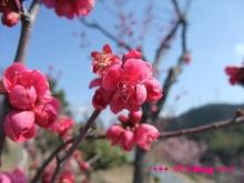 +++ りり☆Blog evolution +++ 広島在住OLの何かやらかしてる日記(・ω・)-20100221_061.jpg