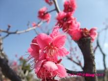 +++ りり☆Blog evolution +++ 広島在住OLの何かやらかしてる日記(・ω・)-20100221_062.jpg