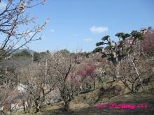 +++ りり☆Blog evolution +++ 広島在住OLの何かやらかしてる日記(・ω・)-20100221_068.jpg