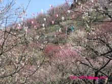 +++ りり☆Blog evolution +++ 広島在住OLの何かやらかしてる日記(・ω・)-20100221_073.jpg