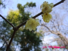 +++ りり☆Blog evolution +++ 広島在住OLの何かやらかしてる日記(・ω・)-20100221_070.jpg