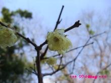 +++ りり☆Blog evolution +++ 広島在住OLの何かやらかしてる日記(・ω・)-20100221_071.jpg