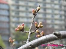 +++ りり☆Blog evolution +++ 広島在住OLの何かやらかしてる日記(ゝω・)o-20100320_010.jpg