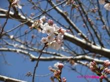 +++ りり☆Blog evolution +++ 広島在住OLの何かやらかしてる日記(ゝω・)o-20100321_013.jpg