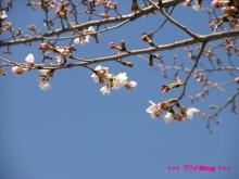 +++ りり☆Blog evolution +++ 広島在住OLの何かやらかしてる日記(ゝω・)o-20100321_014.jpg