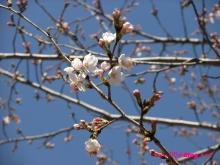 +++ りり☆Blog evolution +++ 広島在住OLの何かやらかしてる日記(ゝω・)o-20100321_016.jpg