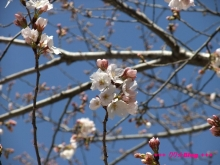 +++ りり☆Blog evolution +++ 広島在住OLの何かやらかしてる日記(ゝω・)o-20100321_017.jpg