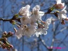 +++ りり☆Blog evolution +++ 広島在住OLの何かやらかしてる日記(ゝω・)o-20100321_018.jpg