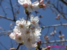 +++ りり☆Blog evolution +++ 広島在住OLの何かやらかしてる日記(ゝω・)o-20100321_020.jpg