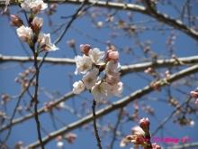 +++ りり☆Blog evolution +++ 広島在住OLの何かやらかしてる日記(ゝω・)o-20100321_021.jpg