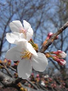 +++ りり☆Blog evolution +++ 広島在住OLの何かやらかしてる日記(ゝω・)o-DVC00399.jpg