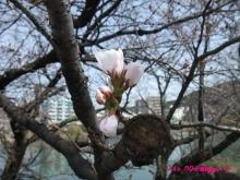 +++ りり☆Blog evolution +++ 広島在住OLの何かやらかしてる日記(ゝω・)o-20100322_004.jpg