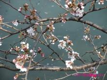+++ りり☆Blog evolution +++ 広島在住OLの何かやらかしてる日記(ゝω・)o-20100322_007.jpg