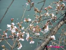 +++ りり☆Blog evolution +++ 広島在住OLの何かやらかしてる日記(ゝω・)o-20100322_009.jpg