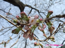 +++ りり☆Blog evolution +++ 広島在住OLの何かやらかしてる日記(ゝω・)o-20100322_013.jpg