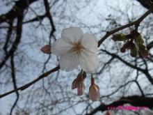 +++ りり☆Blog evolution +++ 広島在住OLの何かやらかしてる日記(ゝω・)o-20100322_015.jpg