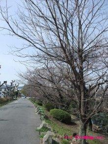 +++ りり☆Blog evolution +++ 広島在住OLの何かやらかしてる日記(ゝω・)o-20100322_019.jpg