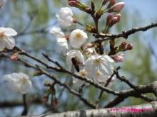 +++ りり☆Blog evolution +++ 広島在住OLの何かやらかしてる日記(ゝω・)o-20100322_022.jpg