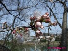 +++ りり☆Blog evolution +++ 広島在住OLの何かやらかしてる日記(ゝω・)o-20100322_030.jpg