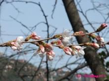 +++ りり☆Blog evolution +++ 広島在住OLの何かやらかしてる日記(ゝω・)o-20100322_031.jpg
