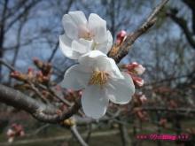 +++ りり☆Blog evolution +++ 広島在住OLの何かやらかしてる日記(ゝω・)o-20100322_035.jpg