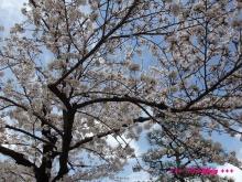 +++ りり☆Blog evolution +++ 広島在住OLの何かやらかしてる日記(ゝω・)o-20100402_000.jpg