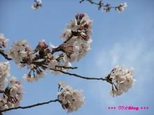 +++ りり☆Blog evolution +++ 広島在住OLの何かやらかしてる日記(ゝω・)o-20100402_002.jpg