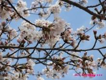 +++ りり☆Blog evolution +++ 広島在住OLの何かやらかしてる日記(ゝω・)o-20100402_006.jpg