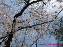 +++ りり☆Blog evolution +++ 広島在住OLの何かやらかしてる日記(ゝω・)o-20100402_008.jpg