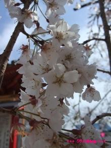+++ りり☆Blog evolution +++ 広島在住OLの何かやらかしてる日記(ゝω・)o-20100402_024.jpg