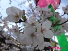 +++ りり☆Blog evolution +++ 広島在住OLの何かやらかしてる日記(ゝω・)o-20100402_038.jpg