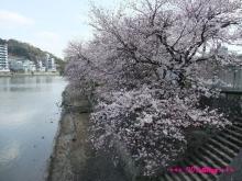 +++ りり☆Blog evolution +++ 広島在住OLの何かやらかしてる日記(ゝω・)o-20100403_009.jpg