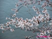 +++ りり☆Blog evolution +++ 広島在住OLの何かやらかしてる日記(ゝω・)o-20100403_011.jpg
