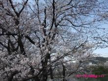 +++ りり☆Blog evolution +++ 広島在住OLの何かやらかしてる日記(ゝω・)o-20100403_013.jpg