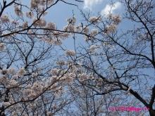 +++ りり☆Blog evolution +++ 広島在住OLの何かやらかしてる日記(ゝω・)o-20100403_014.jpg
