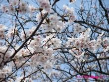 +++ りり☆Blog evolution +++ 広島在住OLの何かやらかしてる日記(ゝω・)o-20100403_015.jpg