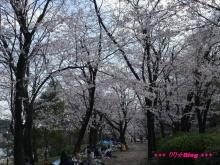 +++ りり☆Blog evolution +++ 広島在住OLの何かやらかしてる日記(ゝω・)o-20100403_027.jpg