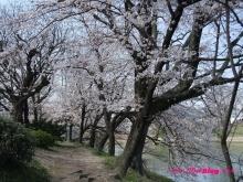 +++ りり☆Blog evolution +++ 広島在住OLの何かやらかしてる日記(ゝω・)o-20100403_028.jpg