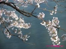 +++ りり☆Blog evolution +++ 広島在住OLの何かやらかしてる日記(ゝω・)o-20100403_030.jpg
