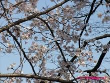 +++ りり☆Blog evolution +++ 広島在住OLの何かやらかしてる日記(ゝω・)o-20100403_031.jpg