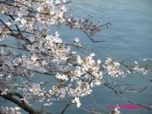 +++ りり☆Blog evolution +++ 広島在住OLの何かやらかしてる日記(ゝω・)o-20100403_032.jpg